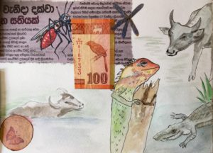 sketchbook animaux du sri lanka