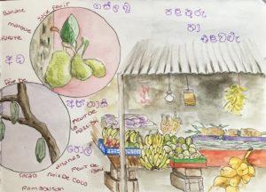 sketchbook sri lanka fruits et legumes croquis