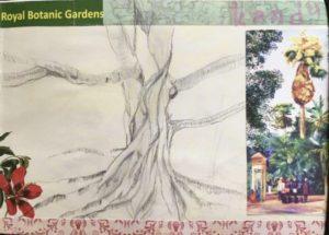 sketchbook sri lanka jardin botanique de Kandy