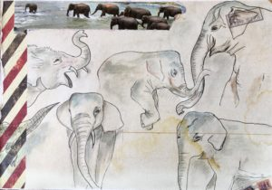 sketchbook elephants