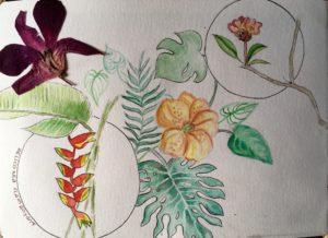sketchbook fleurs du sri lanka